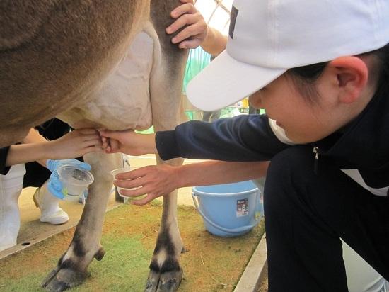 ブログ写真 乳搾り.jpg