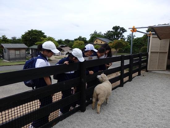 ブログ写真 動物ふれあい.jpg