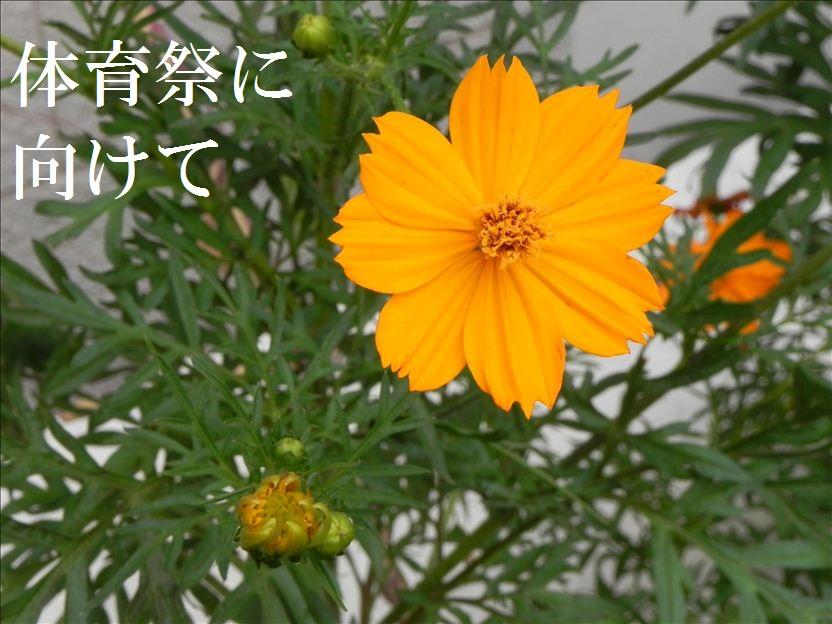 kibana1a.jpg